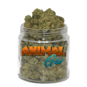 buy animal gas strain online
