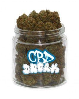 CBD Dream Weed Strain