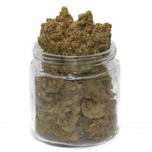 buy golden goat cannabis strain online