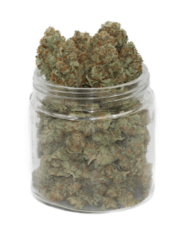 Gold Kush Cannabis Strain