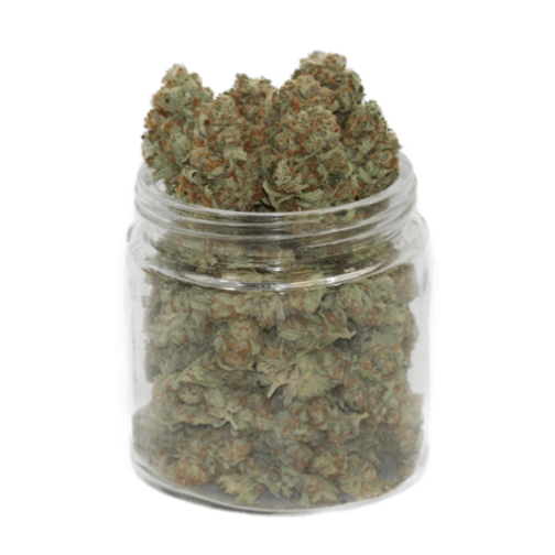 gold kush cannabis strain for sale online