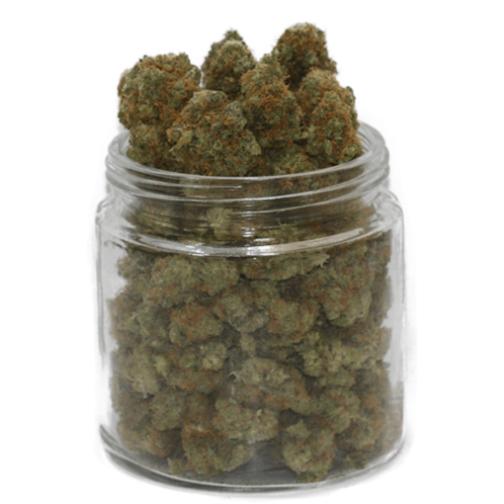 buy blueberry strain online
