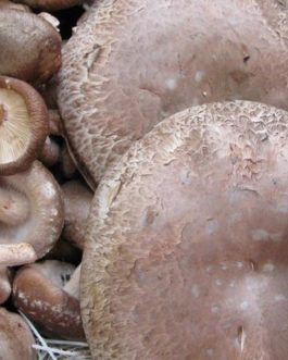 Portobello Mushrooms (200g)