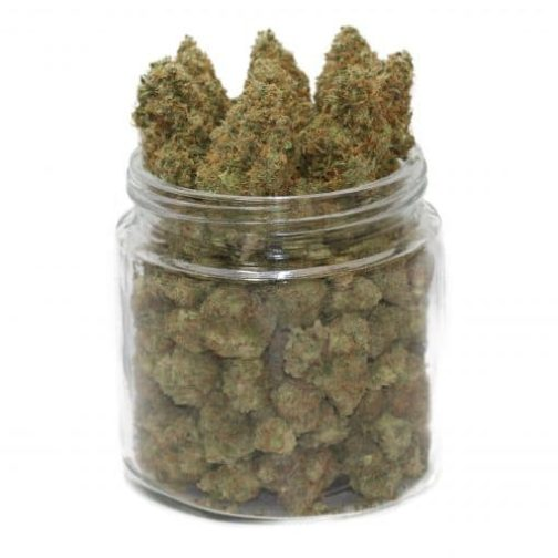 buy white cheese strain online